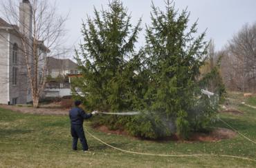 treespray2