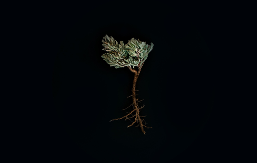 Down to the Root