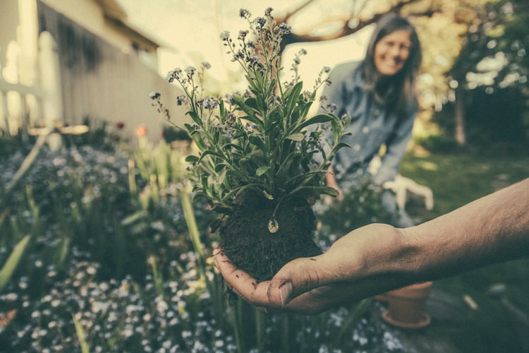 Gardening and Your Health
